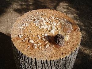 Stump of tree with oozing sap and pine cone
